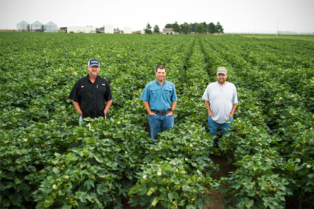 three men in a field of soybeans
