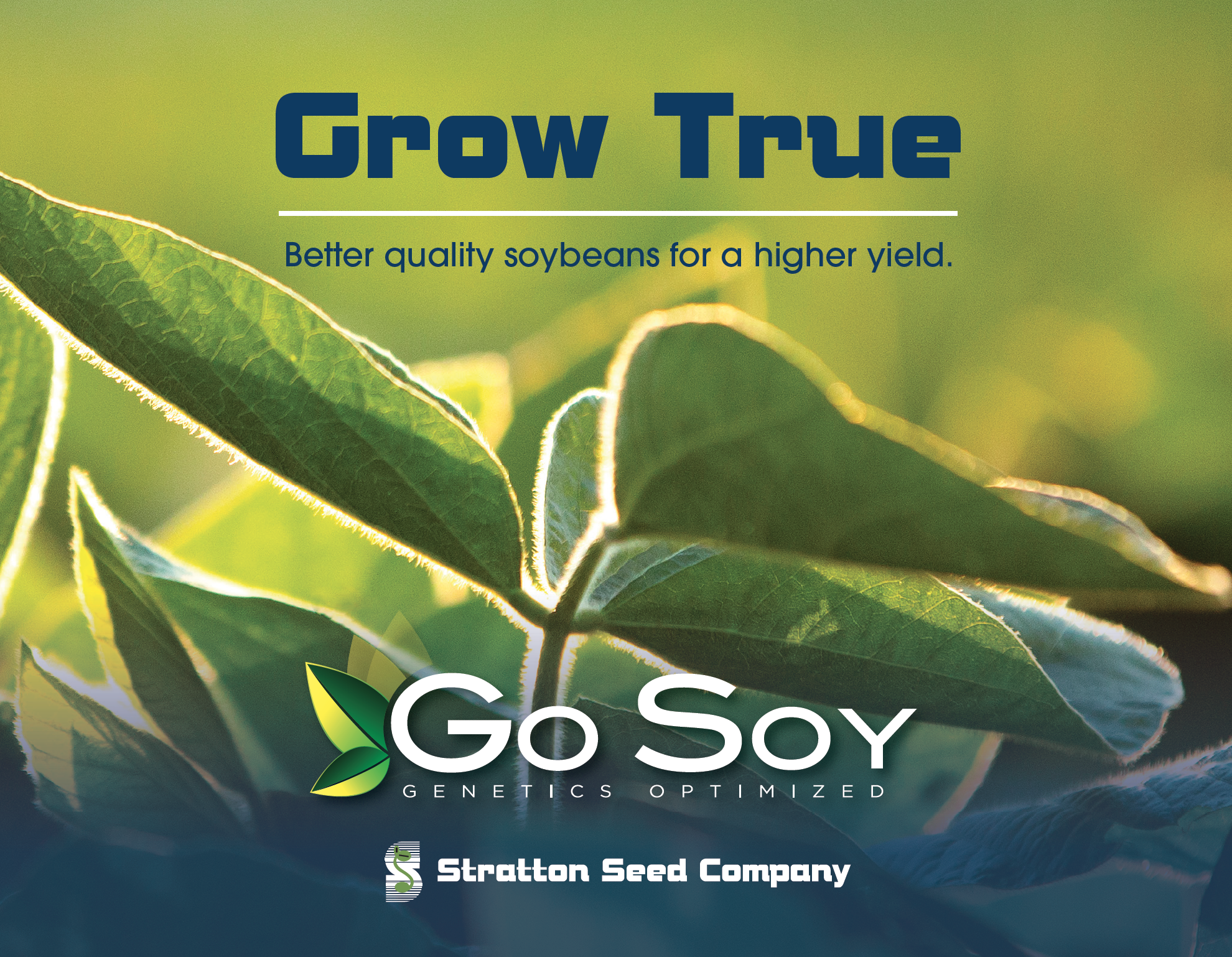 cover of brochure showing close up of soybean and GoSoy logo